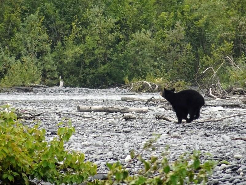 Alaska: Valdez ours et saumons Dsc06813