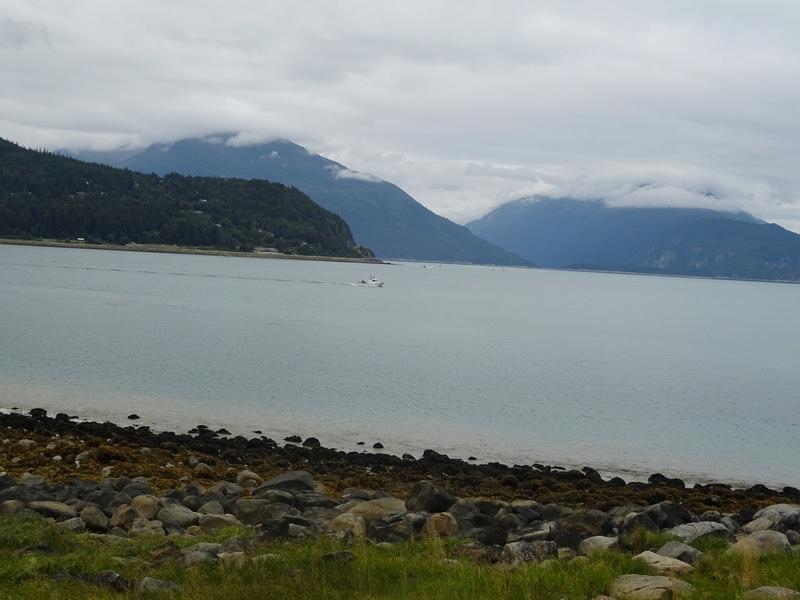 Alaska: Haines grizzly à la pêche Dsc07014