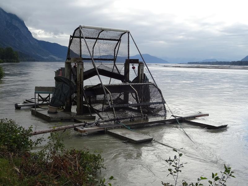 Alaska: Haines grizzly à la pêche Dsc07015