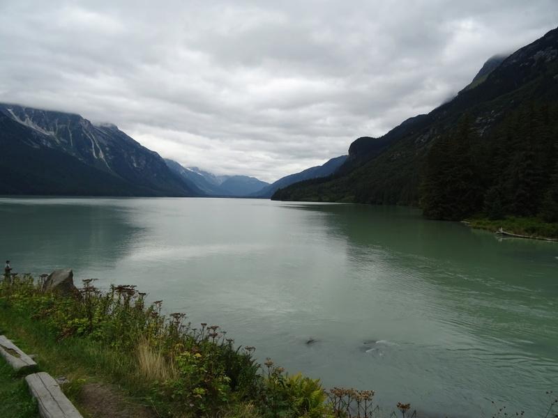 Alaska: Haines grizzly à la pêche Dsc07117