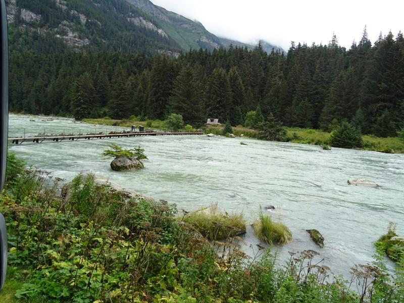 Alaska: Haines grizzly à la pêche Dsc07119