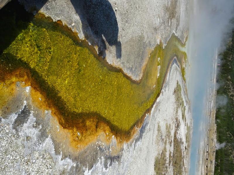 Yellowstone Dsc09512