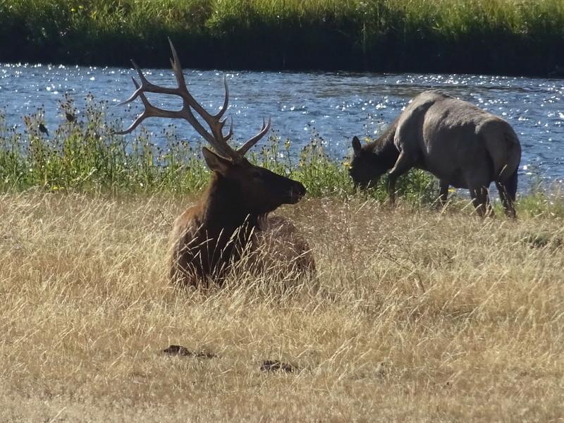 Yellowstone Dsc09710