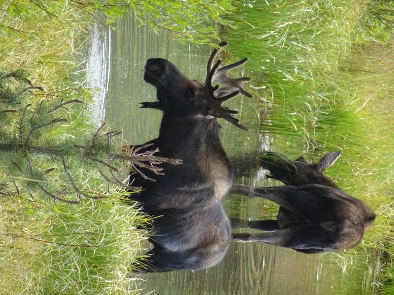 Yellowstone Dsc09910