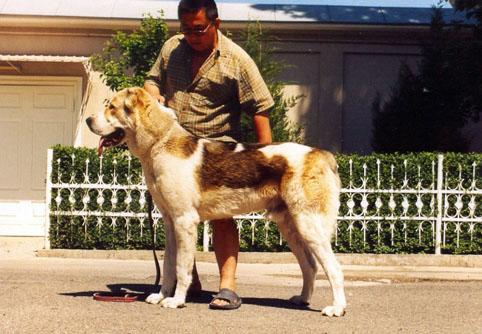 Как Выбрать и  Вырастить ЗДОРОВОГО щенка - Синдром Алексы Han10