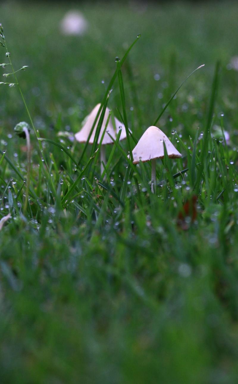 [fil ouvert] les champignons Img_4623