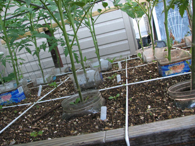 tomato canopy 510
