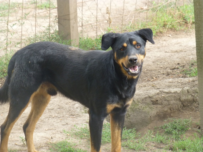 TAMS, M-X, taille moyenne, env. 23 kg, né 2012 (Fourrière BACKA) Pris en charge Animals Rescue - Page 3 310