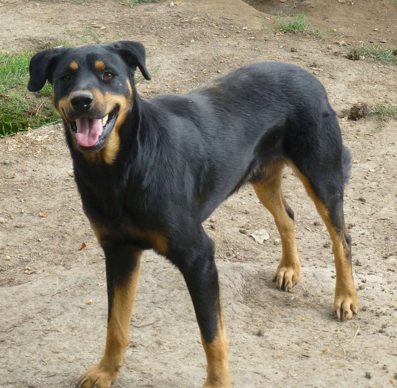 TAMS, M-X, taille moyenne, env. 23 kg, né 2012 (Fourrière BACKA) Pris en charge Animals Rescue - Page 3 410