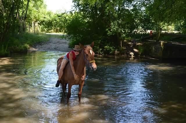 CONCOURS PHOTOS : la magie du cheval Fb_img10