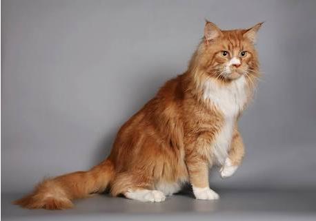 Cait's Kitty Profiles Captur10
