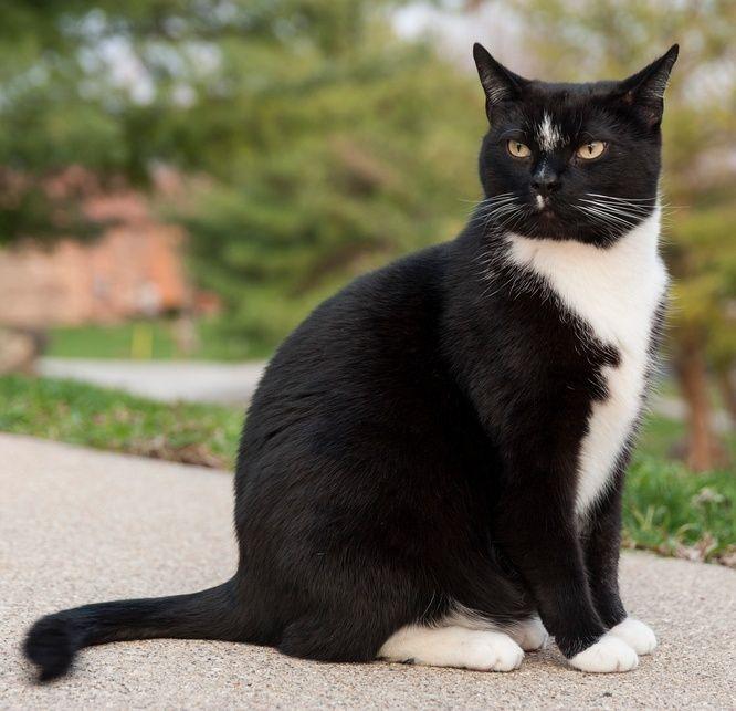 Cait's Kitty Profiles Cat11