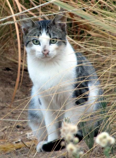 Cait's Kitty Profiles Willow10