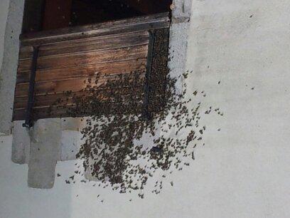 Récupération d'un essaim entre volets et fenêtre  13724321