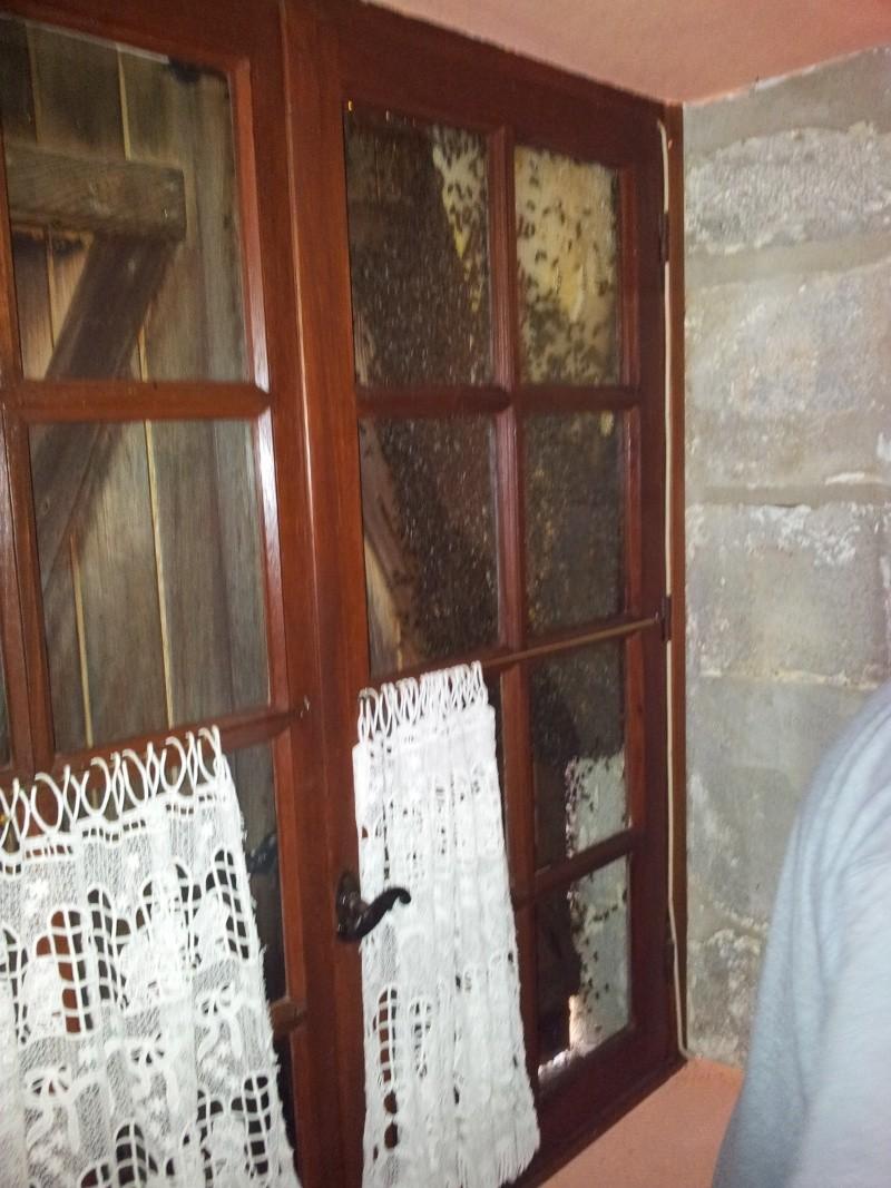 Récupération d'un essaim entre volets et fenêtre  20130611