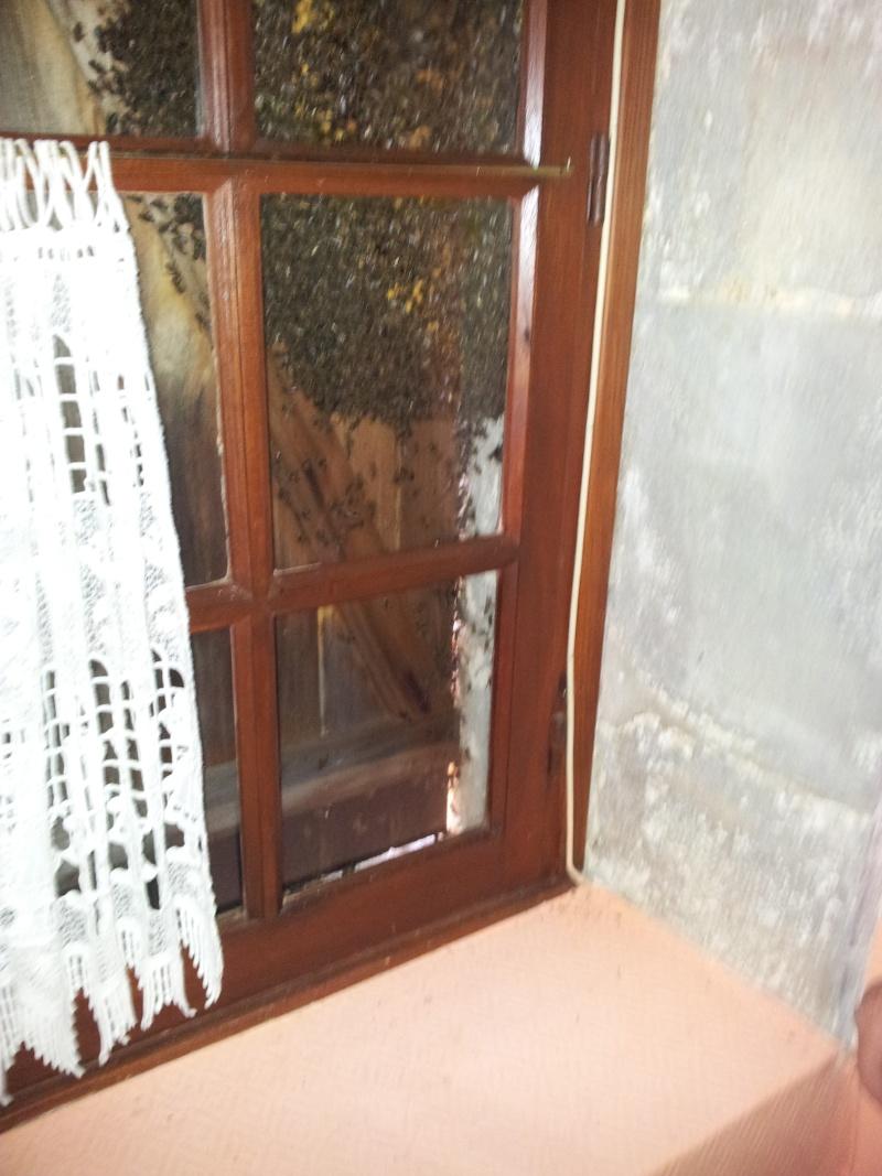 Récupération d'un essaim entre volets et fenêtre  20130612