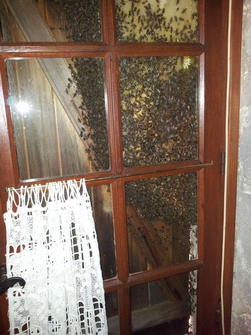 Récupération d'un essaim entre volets et fenêtre  20130614