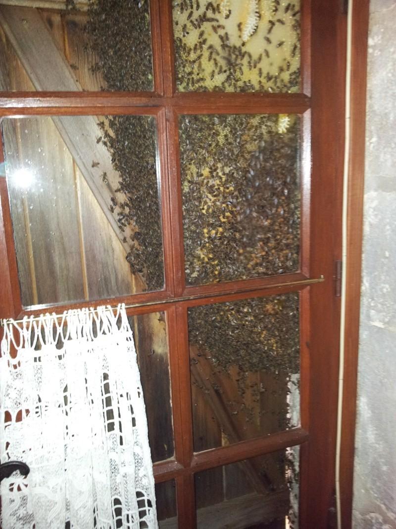 Récupération d'un essaim entre volets et fenêtre  20130615