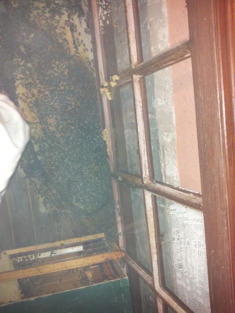 Récupération d'un essaim entre volets et fenêtre  20130616