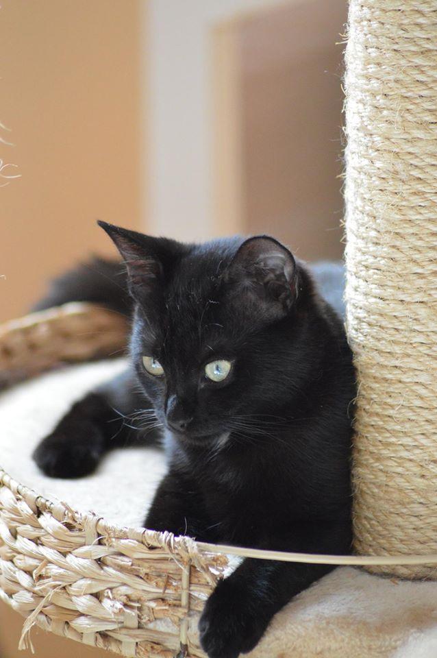 Maëlig, femelle européenne noire estimée née 19/04/2016 - Page 6 14107610