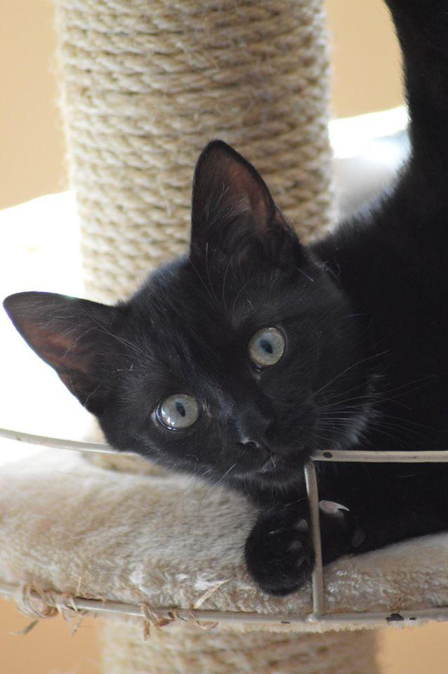 Maëlig, femelle européenne noire estimée née 19/04/2016 - Page 6 14114710