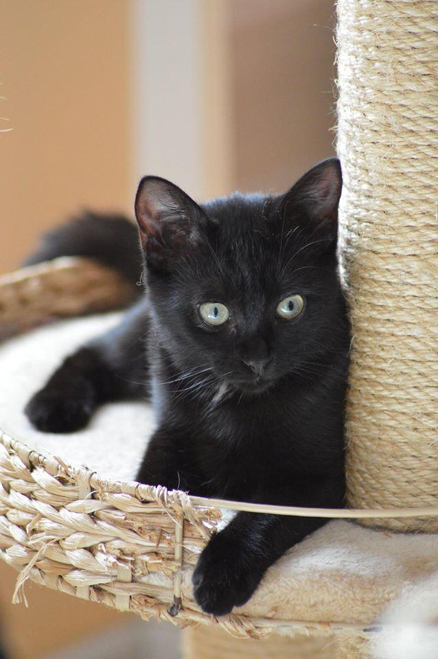 Maëlig, femelle européenne noire estimée née 19/04/2016 - Page 6 14138610