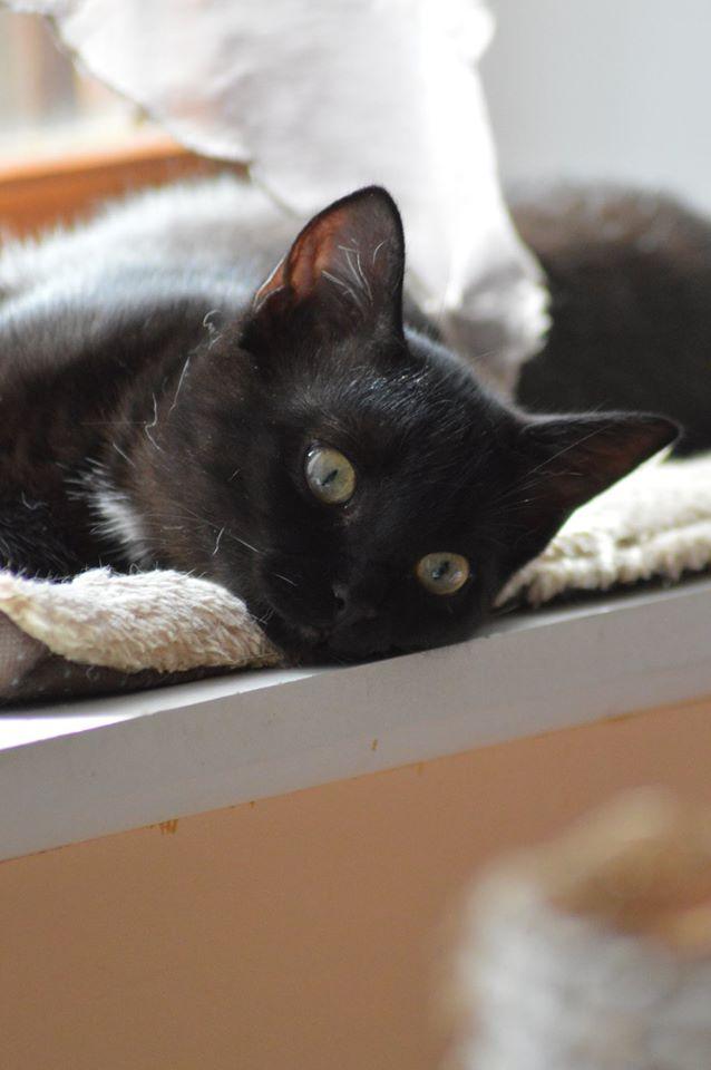Maëlig, femelle européenne noire estimée née 19/04/2016 - Page 6 14195210