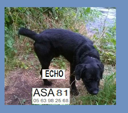 ECHO - griffon 5 ans (3 ans de refuge)  - ASA81 à Aussillon (81) Echo10