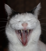 Avatare - bitte beachten - Seite 2 Katze_10