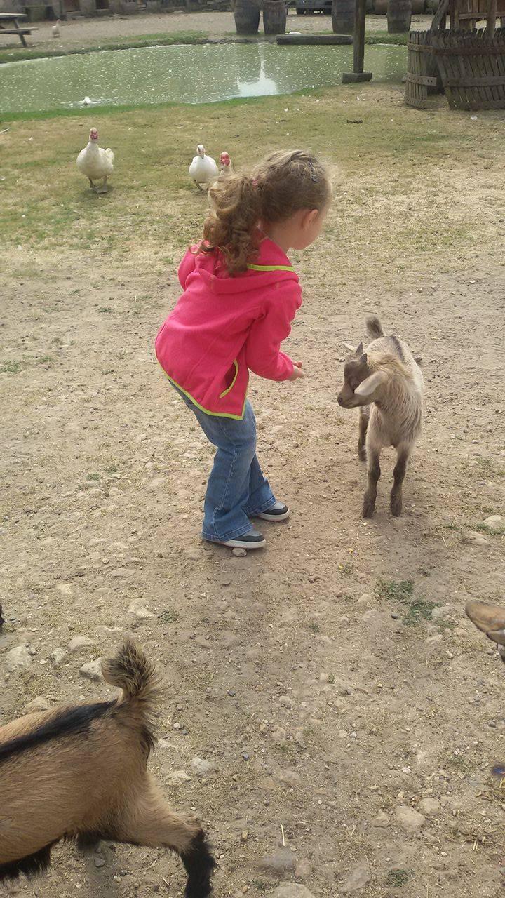 Les chèvres, les biques, les moutons. 0710