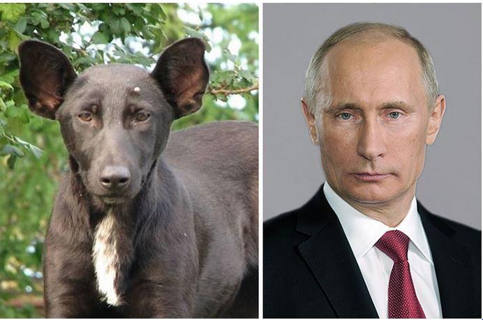 les sosies , ou certaines ressemblances ... Poutin10