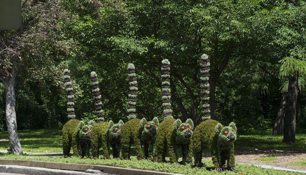 sculture viventi al giardino botanico di montreal Madaga10