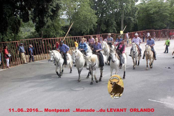 ...11..06..2016...Montpezat Bandide et Enciero Manade Du Levant _mg_0011