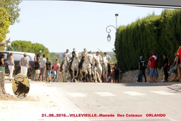 21..08..2016... Villevieille Manade Des Coteaux  _mg_0074