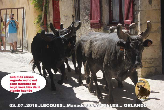 03.. 07..2016.. Lecques Enciero  chabalier  les Alpilles _mg_0116