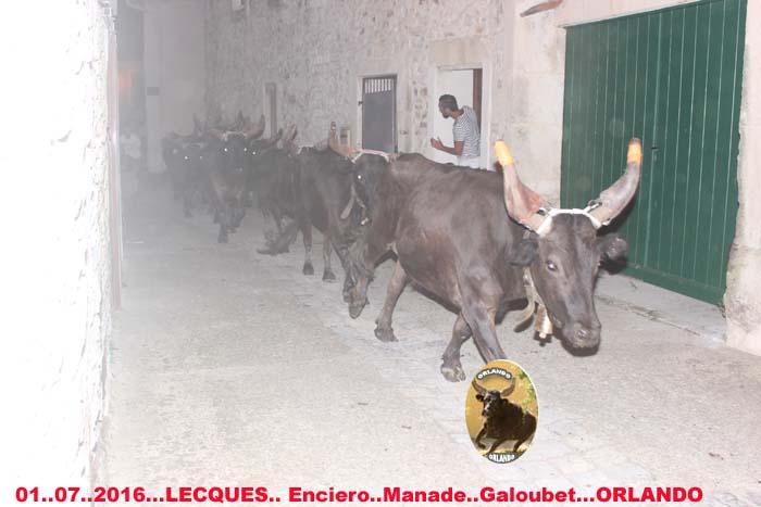 ..01..07..2016..Lecques  Manade Galoubet  Bandide &  Enciero Img_0019