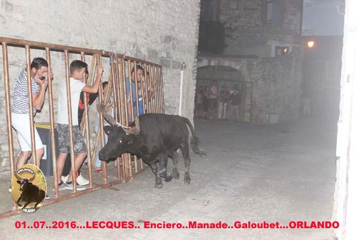 ..01..07..2016..Lecques  Manade Galoubet  Bandide &  Enciero Img_0020