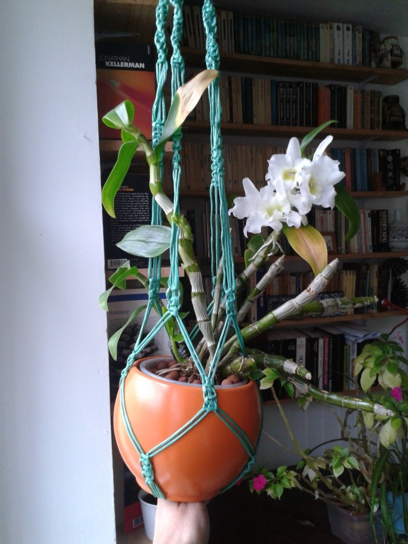 Dendrobium nobile blanc 2016-036