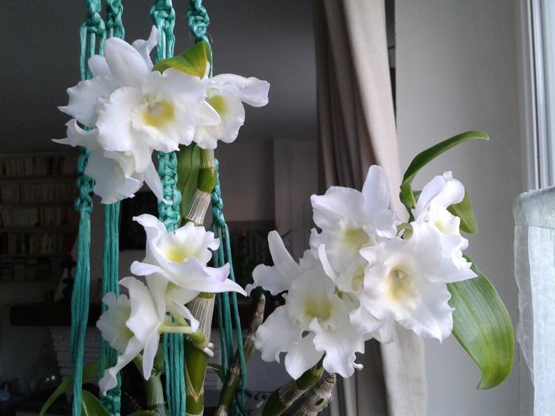 INSCRIPTIONS - La fleur du mois (catégorie floraison maison) - JUIN 2016 2016-055