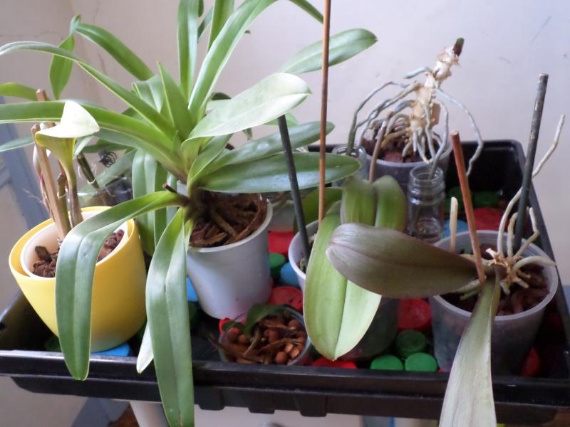 Vacances des orchidées, quelques questions Sam_3118