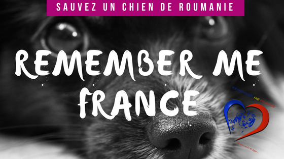Association Remember Me France : sauvez un chien roumain !