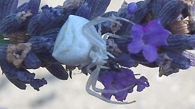 Drole d'insectes Araign10