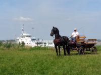 Balade à poney Shetland le 06/08/2016 Calech16