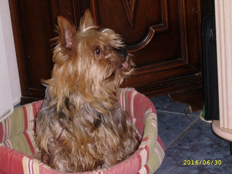 GADYNA, craquante tite york de 5 ans, réformée d'élevage Ssa56524