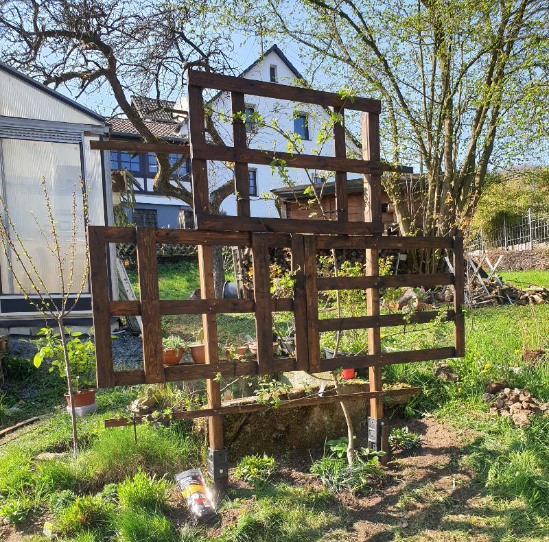 Was für Obstsorten habt Ihr denn im Garten? Aussaat, Spalier, Beerensträucher, Erfahrung und Hilfe :) - Seite 17 20190428