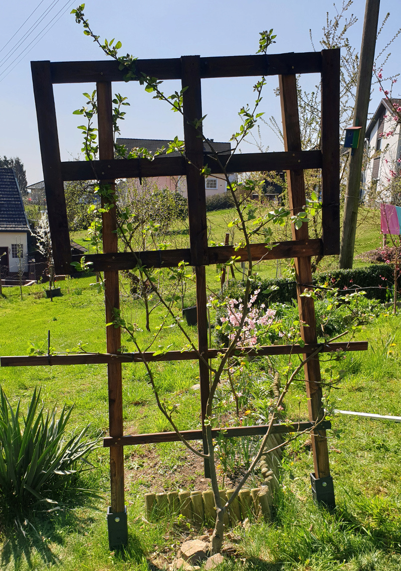 Was für Obstsorten habt Ihr denn im Garten? Aussaat, Spalier, Beerensträucher, Erfahrung und Hilfe :) - Seite 17 20190429