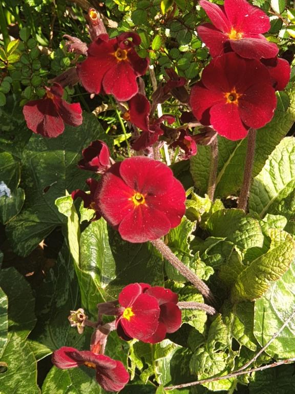 Erste Frühlingsboten im Garten und in Wald und Flur - Seite 93 20200316