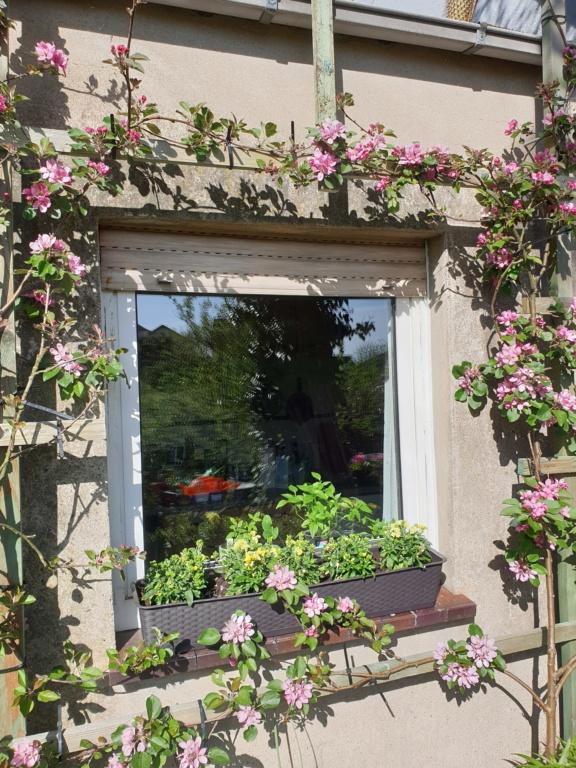 Was für Obstsorten habt Ihr denn im Garten? Aussaat, Spalier, Beerensträucher, Erfahrung und Hilfe :) - Seite 17 20200417