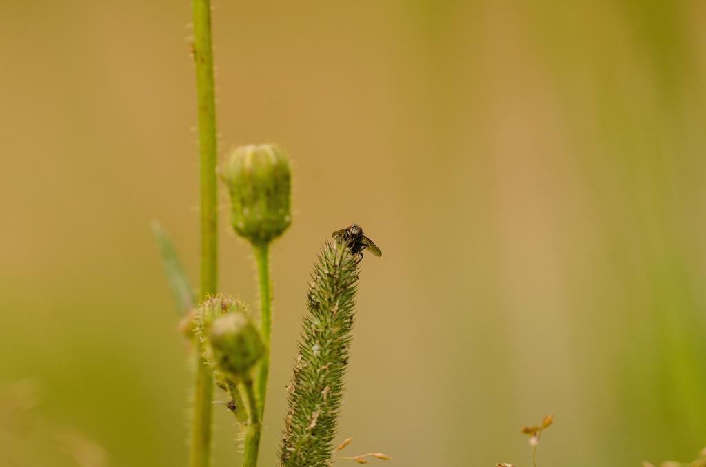Insecte Dsc_0014
