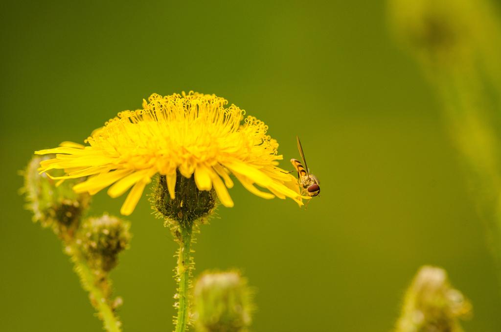 Insecte Dsc_0016